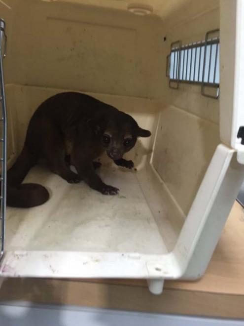 Egy amerikai nő otthonába érdekes állat surrant be
