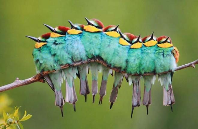 Bűbájos fotósorozat szorosan egymáshoz bújó madarakról